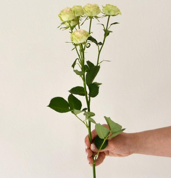 Маленький букет роз