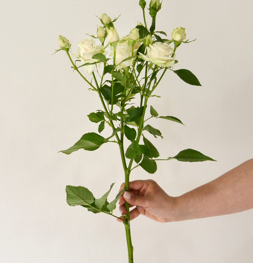 Small bouquet of roses